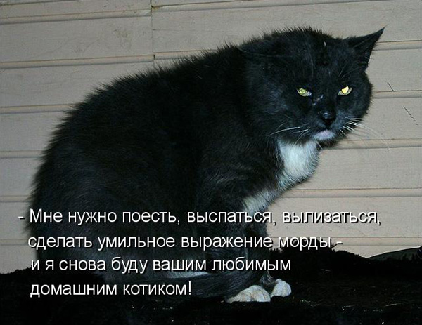 prikolnye-koty-i-sobaki-85 (600x463, 98Kb)