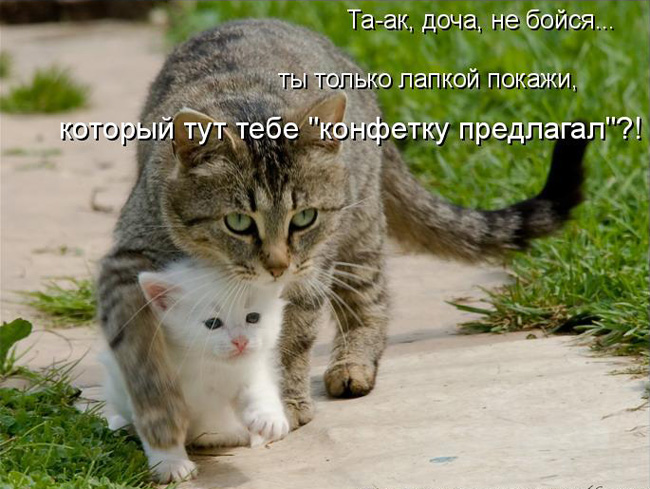 prikolnye-koty-i-sobaki-88 (650x489, 126Kb)