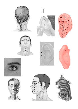 Голова (332x464, 21Kb)