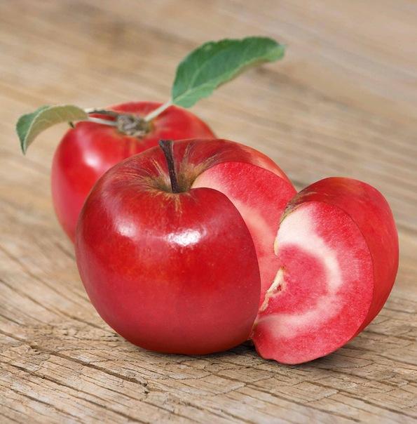 Яблоко-помидор (595x604, 94Kb)