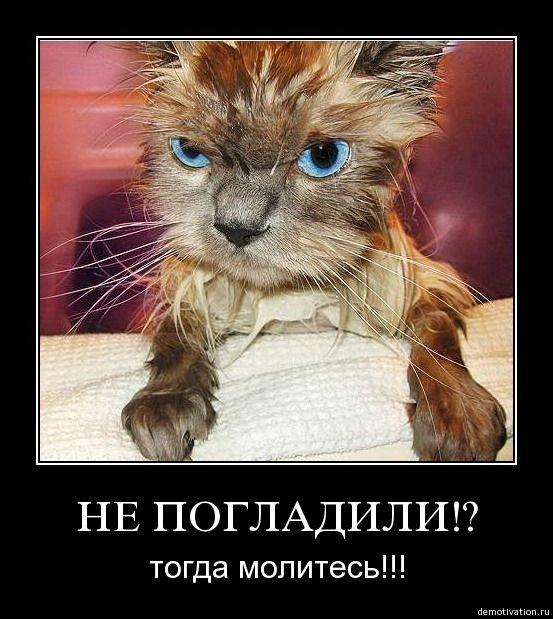 http://img1.liveinternet.ru/images/attach/c/4/81/607/81607707_60085630_1276067636_19855.jpg
