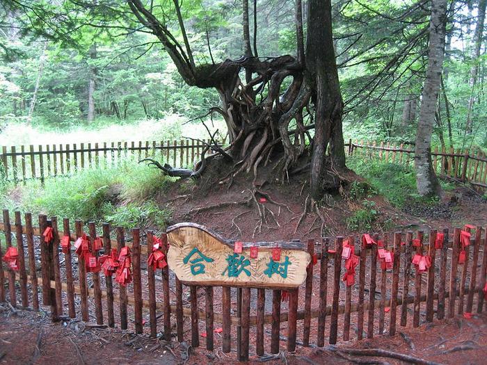 Чанбайшань – биосферный заповедник Китая 70147