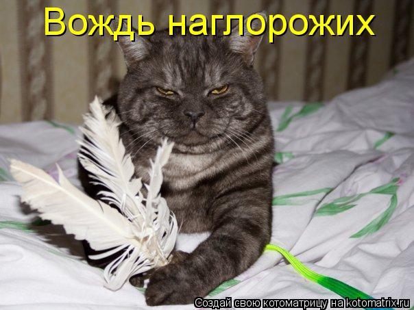 http://img1.liveinternet.ru/images/attach/c/4/81/626/81626309_45_kotomatrica.jpg
