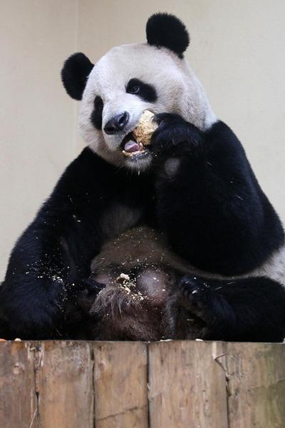 panda sweetie 4 (400x600, 55Kb)