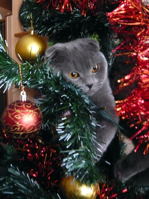 Картинки кота с новым годом
