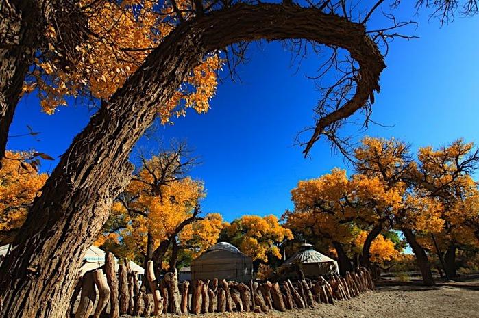 Геологический парк пустыни Алашань 41929