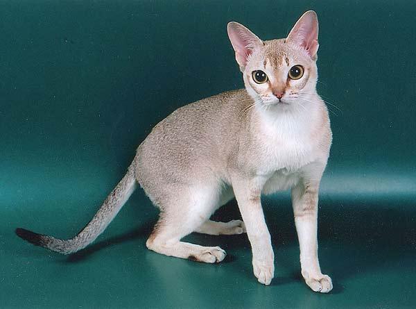 картинки самая маленькая кошка