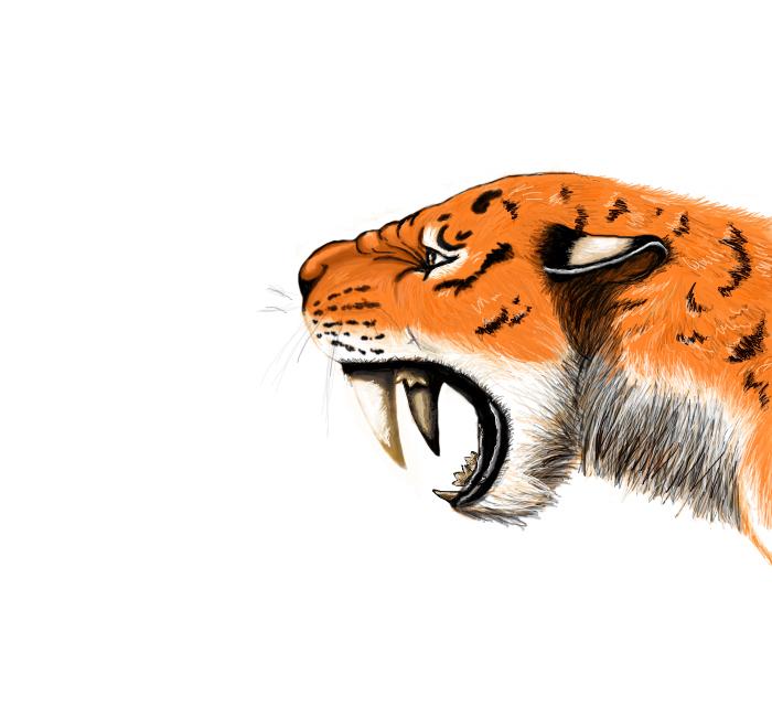 Тигр (700x650, 186Kb)