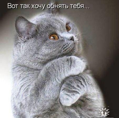 80031400_obnyat_hochu (453x451, 37Kb)