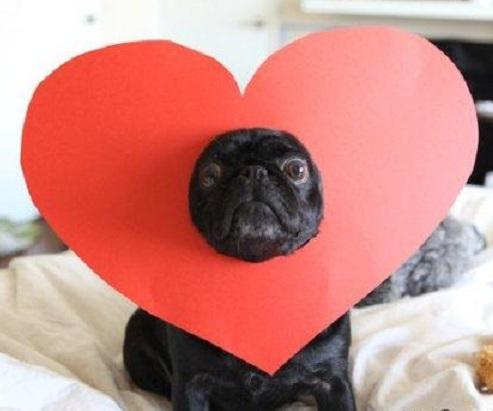 моё сердце с вами (493x411, 45Kb)
