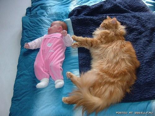 кошки породы мэйкун.