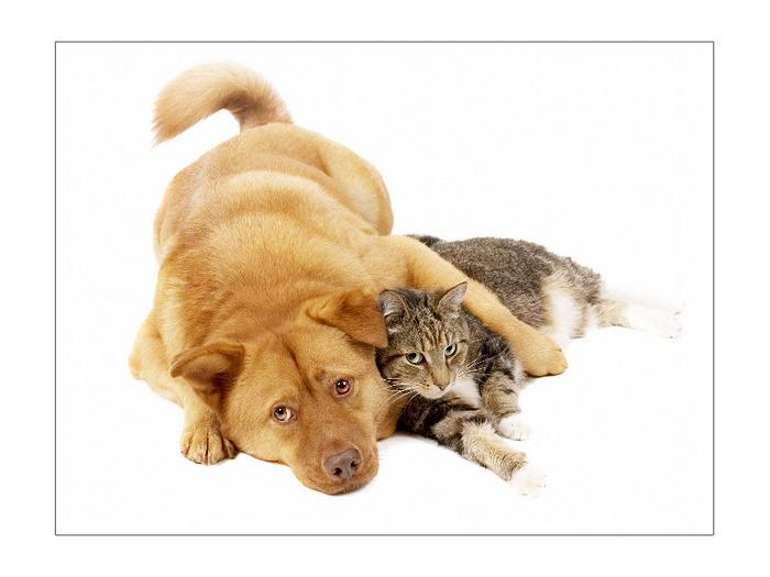 собаки и кошки (700x525, 75Kb)