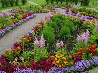 цветов для клумбы (320x240, 44Kb)