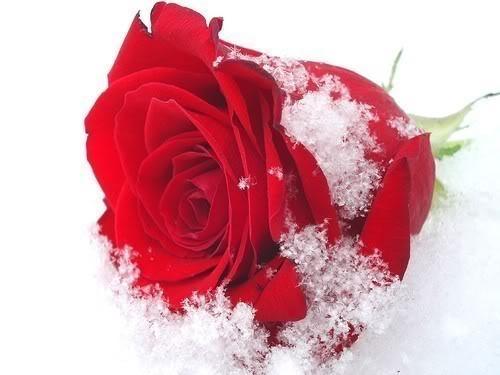 Суббота 07 января 2012 г 12 38 в цитатник