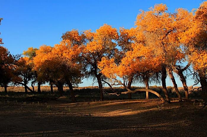 Геологический парк пустыни Алашань 69709