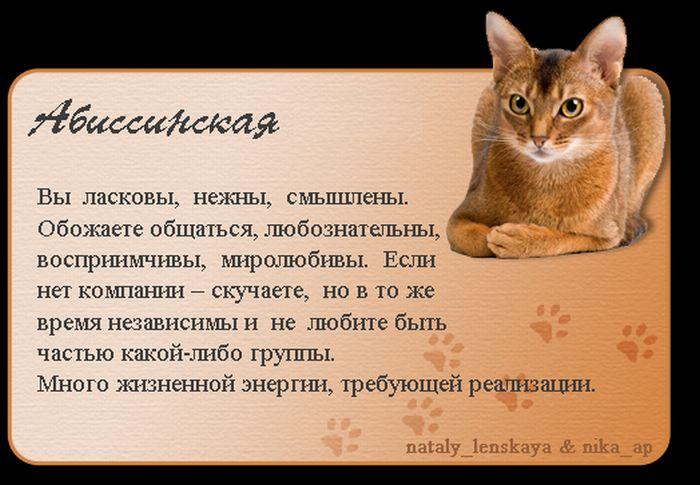 1325690170_cats_01 (700x485, 62Kb)