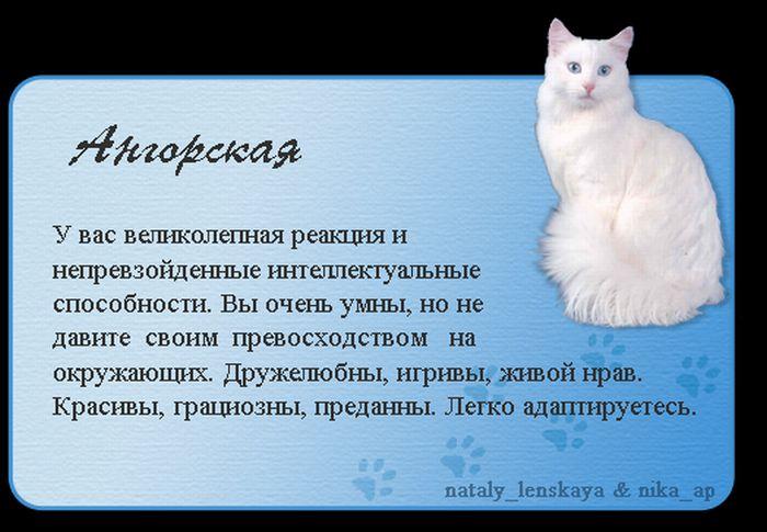 1325690170_cats_01 (700x485, 56Kb)