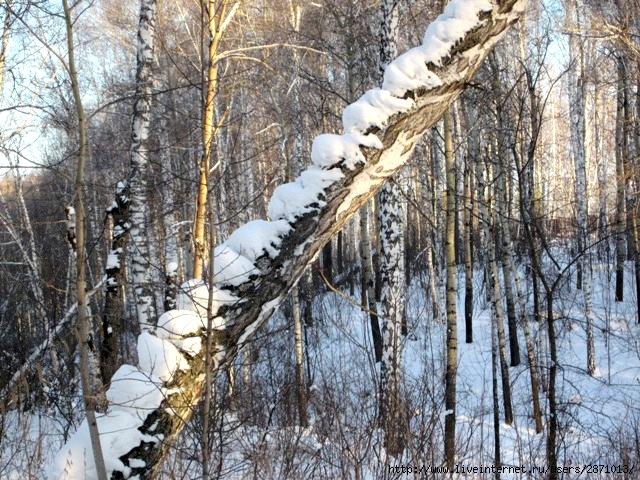 Новый 2012 год у Шевердиных 193 (640x480, 316Kb)