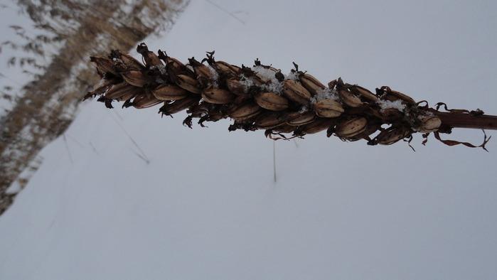 зима_2012 042 (700x394, 49Kb)