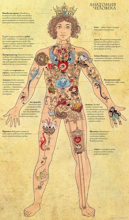 4355329_1324222046_human_anatomia_full (410x700, 287Kb)
