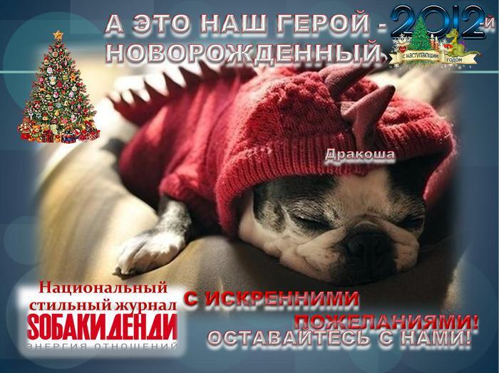 SOBAKIDENDY_ПОЗДРАВЛЕНИЕ С НОВЫМ 2012 ГОДОМ_10_1 (700x524, 68Kb)