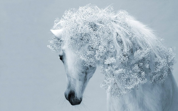 Animals_Horses_Beautiful_white_horse_031470_ (700x437, 73Kb)