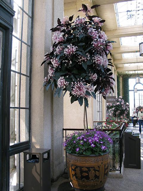 Сады Лонгвуда, Пенсильвания, США. 33064