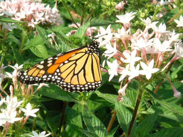 Сады Лонгвуда, Пенсильвания, США. 41399