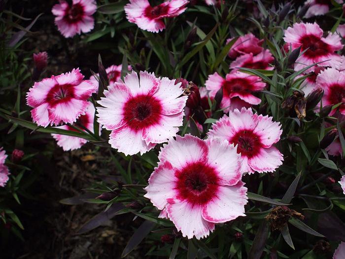 Сады Лонгвуда, Пенсильвания, США. 68024