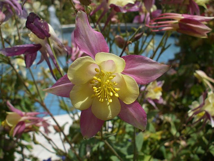 Сады Лонгвуда, Пенсильвания, США. 15011