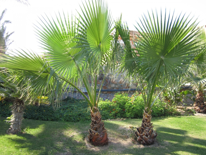 Stella Makadi Garden Resort 5*/4083456_Egypt175 (700x525, 352Kb)