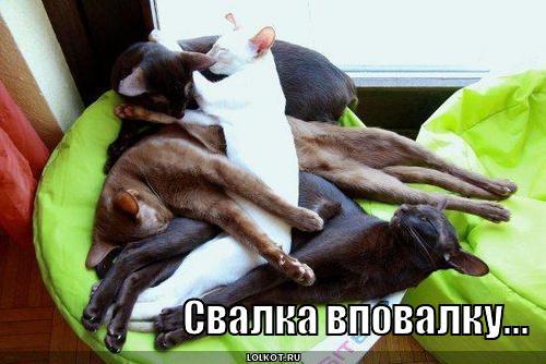 4287072_svalka_1287592098 (500x334, 33Kb)