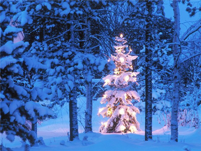 Winter Trees White Snow World Background Photograph Photo