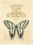Превью mariposas.IV (445x600, 65Kb)