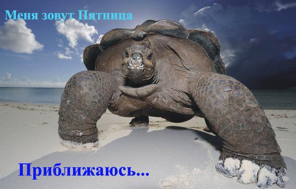 черепаха пятница 13/4348076_Pyatnica3 (596x380, 93Kb)