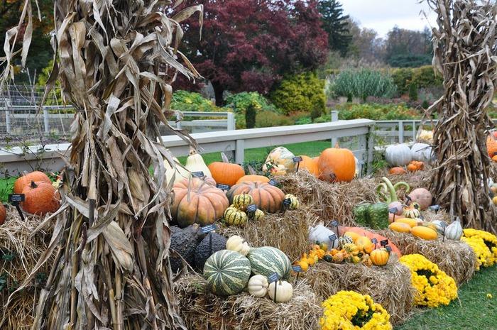 Сады Лонгвуда, Пенсильвания, США. 22263