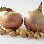 do-onion-seeds-need-grow_-800x800 (180x180, 6Kb)