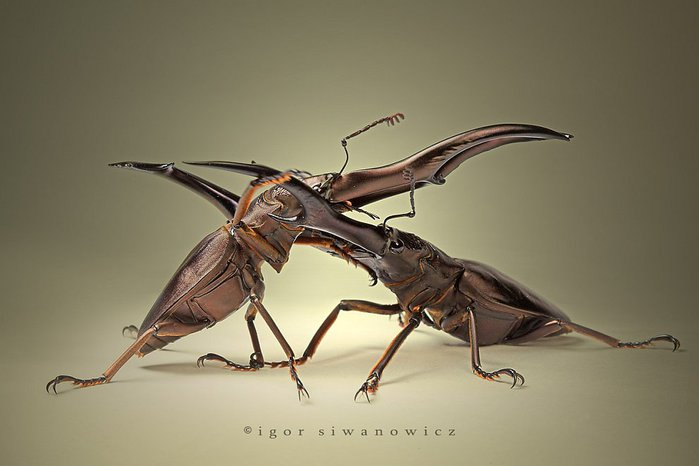 макросъемка насекомые