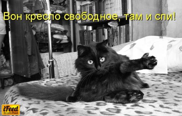 смешные котоматрицы фото