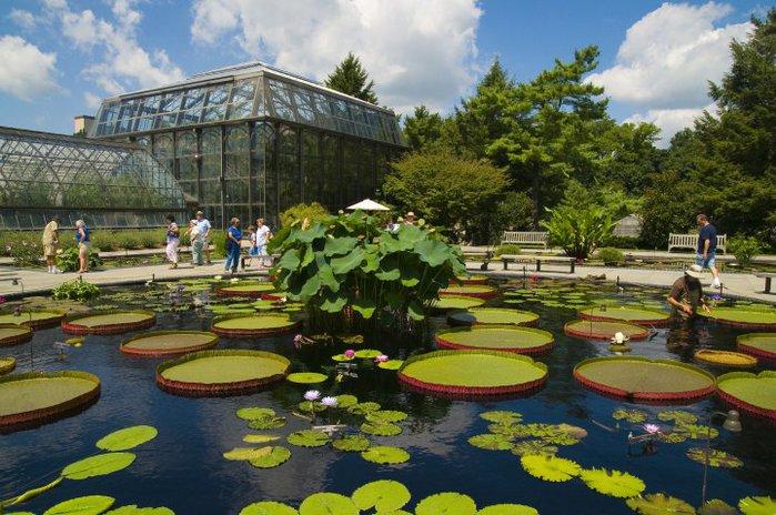 Сады Лонгвуда, Пенсильвания, США. 54278