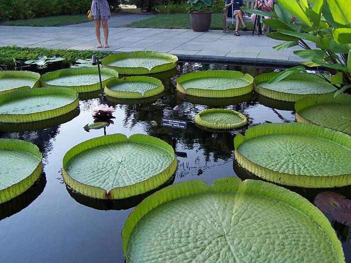 Сады Лонгвуда, Пенсильвания, США. 17303