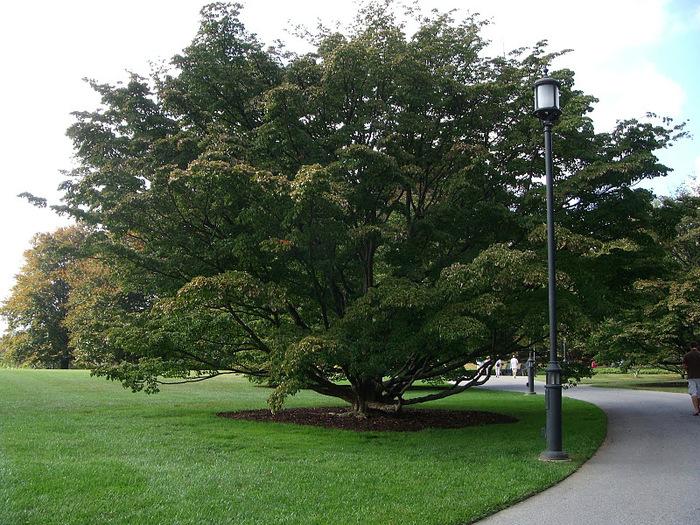Сады Лонгвуда, Пенсильвания, США. 94581