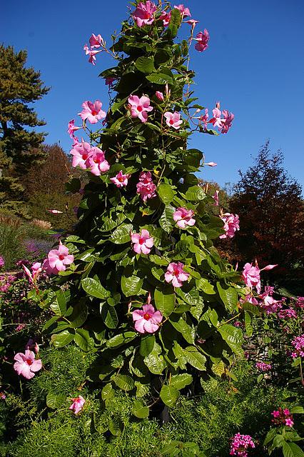 Сады Лонгвуда, Пенсильвания, США. 77097