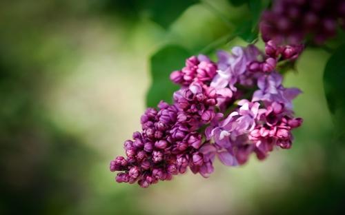 Бесподобные цветы