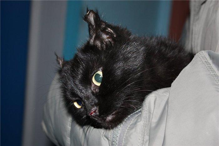 У кошки обморожены уши что делать