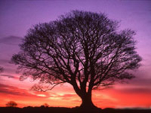tree (220x165, 64Kb)