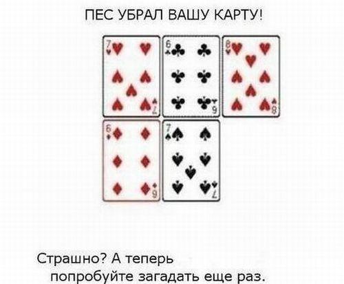 4287072_1324561117_focus_03 (500x413, 25Kb)