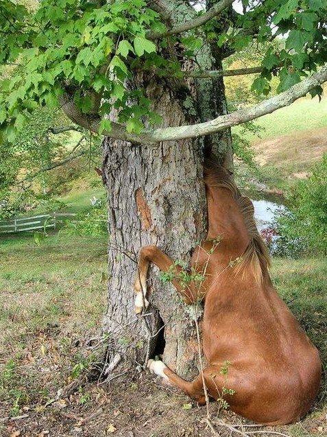 Sewer (Basement) Horse, канализационная лошадь - близкая родственница