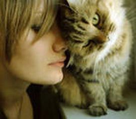 кошка в доме_новый размер (273x240, 20Kb)
