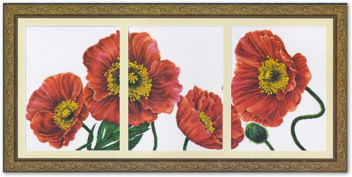 100407 Blooming poppies 2 (700x353, 63Kb)